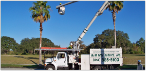 M&M Tampa Tree Services