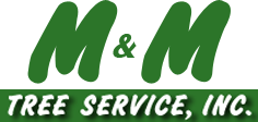 Most Reliable Tree Service Tampa, FL Provider | Serving Hillsborough, Pinellas & Pasco Counties | M&M TREE SERVICE, Inc.